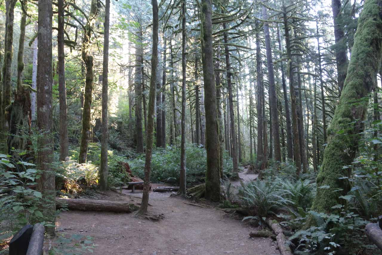 For much of the first 1.2 miles towards the Lower Falls, the Woody Trail stayed true to its name as it meandered amongst temperate rainforest settings like what's shown here