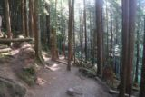 Wallace_Falls_17_047_07292017 - The Woody Trail continuing to meander amongst a pretty thick forest en route to the Wallace Falls as seen during my July 2017 hike