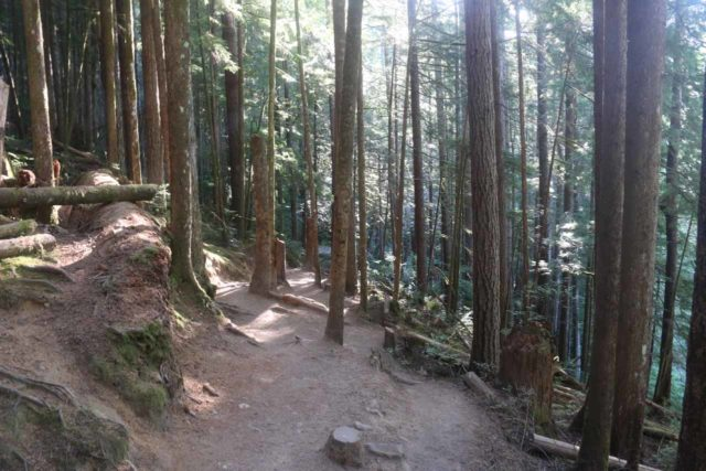 Wallace_Falls_17_047_07292017 - Meandering about on the well-forested trail leading to the Lower Wallace Falls