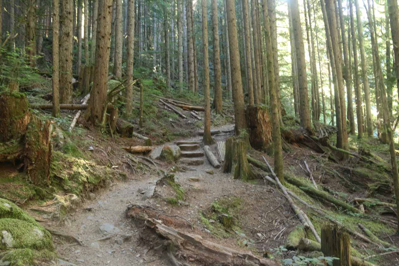Beyond the top of the Middle Wallace Falls, the trail continued climbing some steps as well as a few more switchbacks