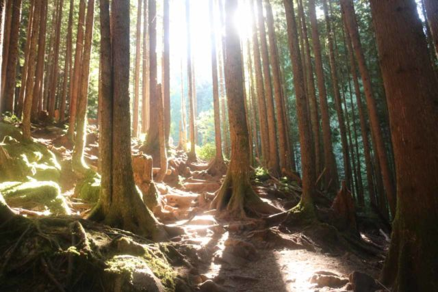 Wallace_Falls_17_123_07292017 - Having to contend with the morning sun near the Upper Wallace Falls