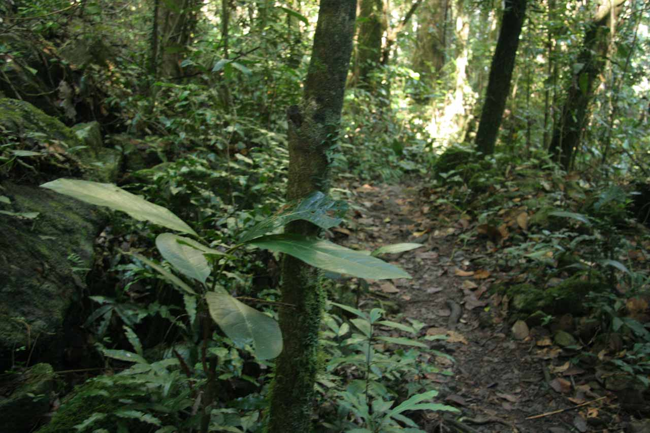 Going back up through the rainforest