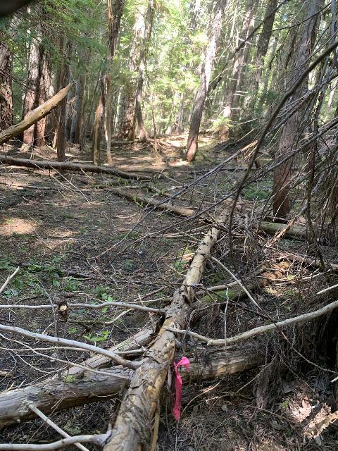 Walupt_Falls_004_iPhone_06212021 - This was the lone colored ribbon that I saw once I got well past the series of them at the Walupt Creek Crossing