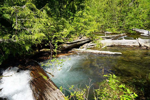 Walupt_Falls_012_06212021 - Due to the high flow of Walupt Creek during my June 2021 visit, it was very sketchy trying to figure out a proper traverse of Walupt Creek without ruining my camera and other equipment, especially given the amount of overgrowth and slippery logs