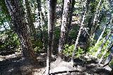 Walupt_Falls_060_06212021 - Making the steep descent towards the base of Walupt Falls