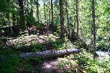 Walupt_Falls_132_06212021 - Still continuing on the return hike from Walupt Falls alongside Walupt Creek