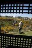 Waratah_Falls_003_11262006 - Watching Julie checking out Waratah Falls during our first visit back in late November 2006
