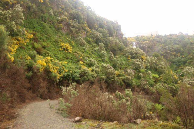 Waratah_Falls_17_040_12012017 - Following the gravel track descending to the base of Waratah Falls