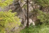 Wasserlochklamm_171_07062018 - It's hard to get a good view of it, but you have to look carefully to see the natural arch behind the tree near the Wasserloch