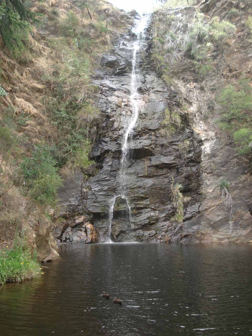 View from across the plunge pool of the First Falls fronted by a pair of ducks