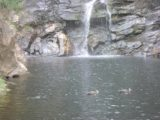 Waterfall_Gully_017_jx_11202006
