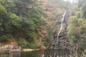 Waterfall_Gully_17_021_11102017