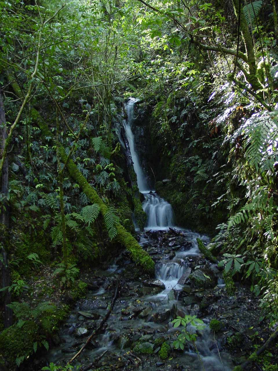 This was the tiny cascade I saw at the start of the Waterfall Walk
