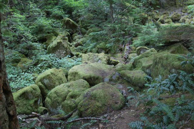 Watson_Falls_019_07142016 - The mossy boulders that reminded my Mom of the trolls in Disney's Frozen