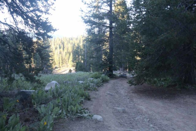 Webber_Falls_007_07122016 - The trail that led us towards the upper drop of Webber Falls