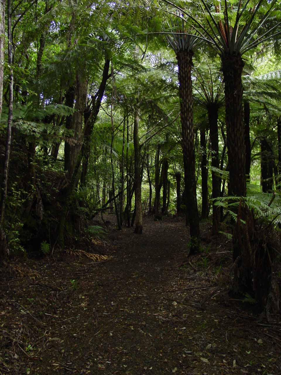 Walking through a shady forest on the way to Wentworth Falls