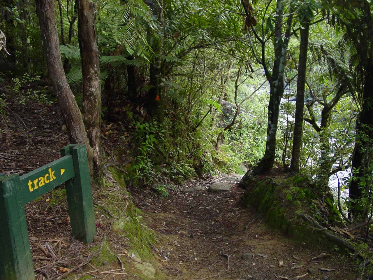 Following the signs pointing the way back to the start of the Wentworth Falls Track