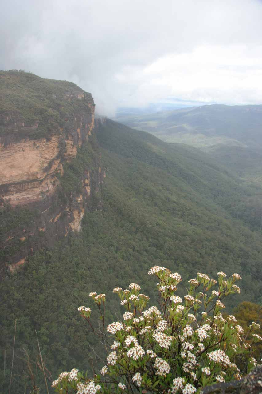 View of the cliffs from the falls lookout