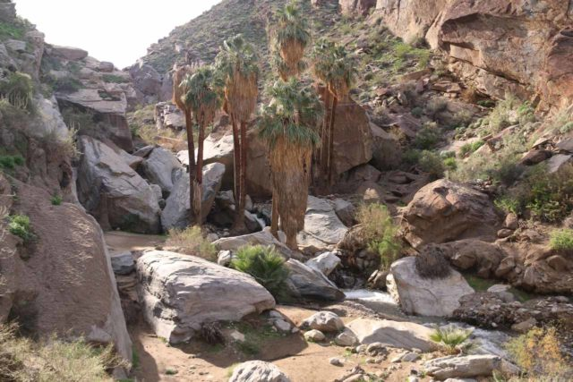 West_Fork_Falls_009_02112017 - Context of the California Fan Palms and giant boulders concealing most of the West Fork Falls when seen from afar