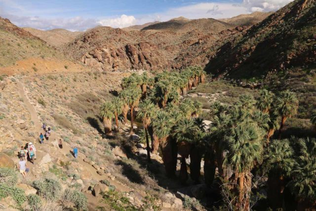 West_Fork_Falls_038_02112017 - Also within the paid admission area was the scenic Palm Canyon (by the Trading Post), where a large grove of giant palm trees all bunched together contrasted the desert landscape around them