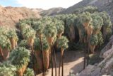 West_Fork_Falls_039_02112017 - Last look into Palm Canyon before leaving