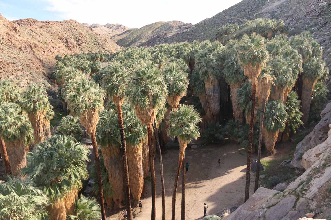 Last look into Palm Canyon before leaving