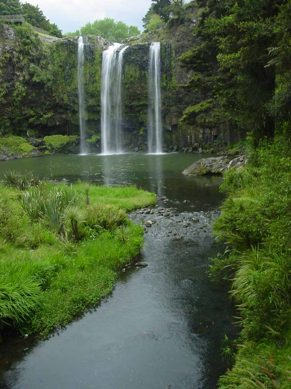 About an hour's drive north of Piroa Falls was the attractive Whangarei Falls by the town of Whangarei