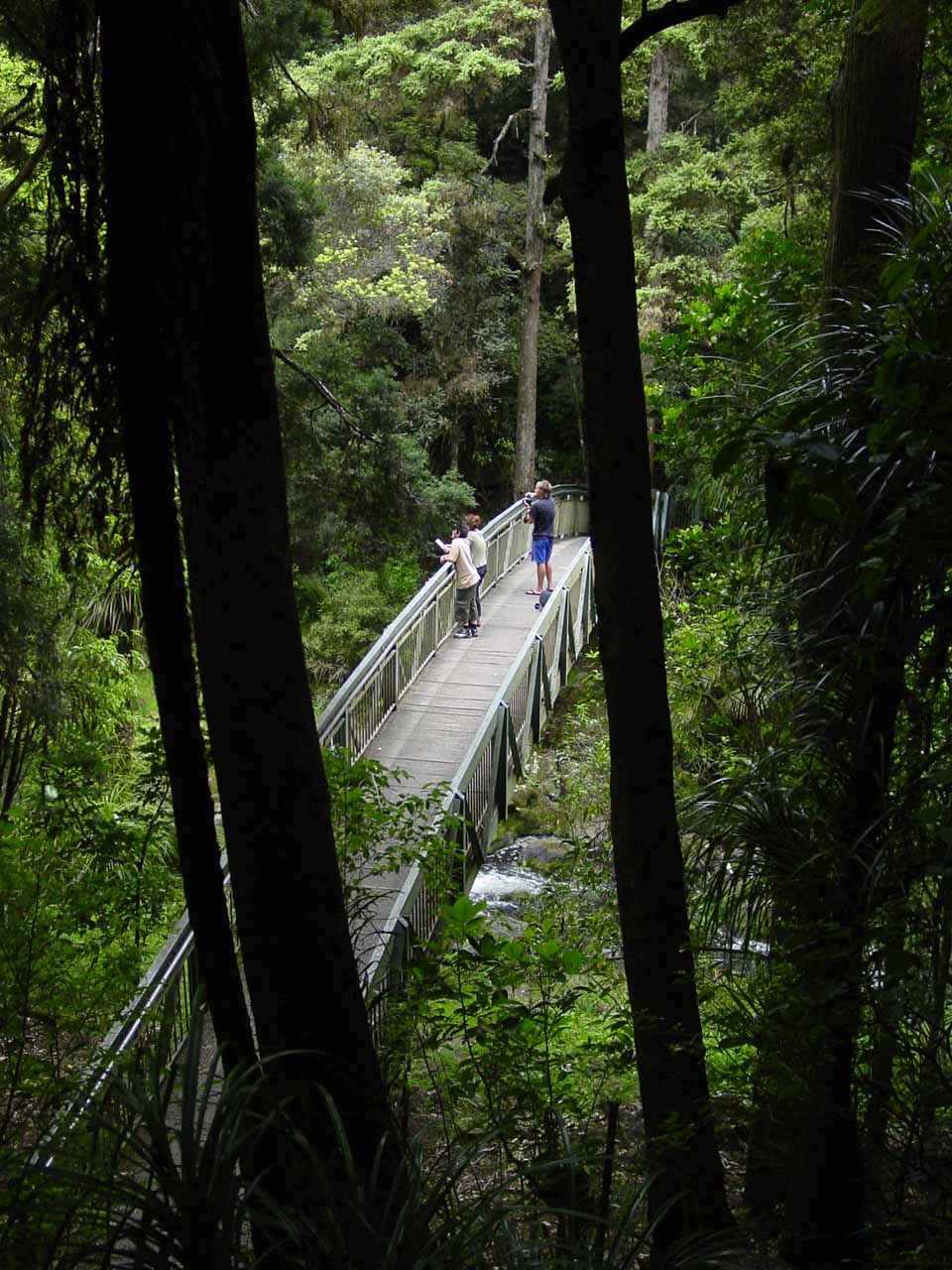 Looking down at the bridge crossing the stream downstream of Whangarei Falls