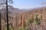 Whiskey_Falls_080_07102016 - This was not the Sierra Natioanl Forest with Autumn colors as millions of trees had died off from bark beetles resulting from the severe drought