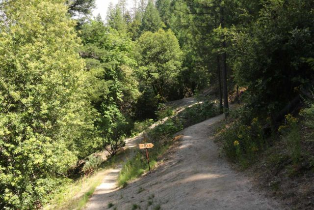 Whiskeytown_Falls_019_06182016 - Keeping right at this signed junction with some kind of false trail to continue the 700ft climb up to the apex of the Whiskeytown Falls Trail