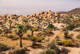 White_Tank_108_05182019 - Looking back across a few Joshua Trees towards another jumble of boulders off in the distance near Arch Rock