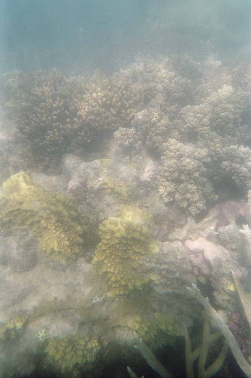 Closer look at the reefs underwater while snorkeling in the Mantaray Bay