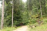 Wildenstein_Waterfall_018_07102018 - Approaching the picnic table and signpost where the Wildenstein Waterfall Trail started climbing a bit more steeply.  That path leading into the overgrowth to the left was a false trail