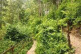 Wildenstein_Waterfall_069_07102018