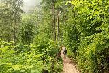 Wildenstein_Waterfall_070_07102018