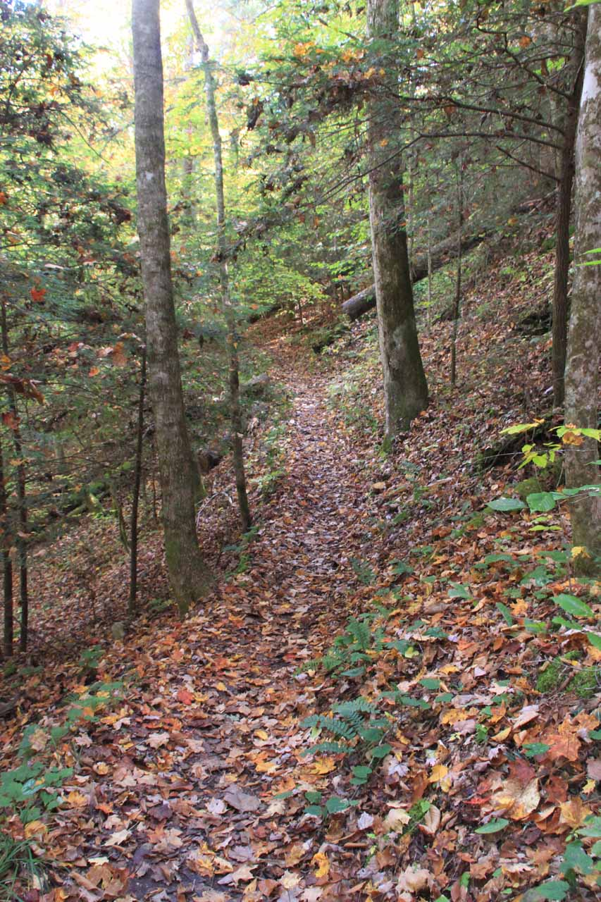 The narrow, leaf-covered trail approaching the arch