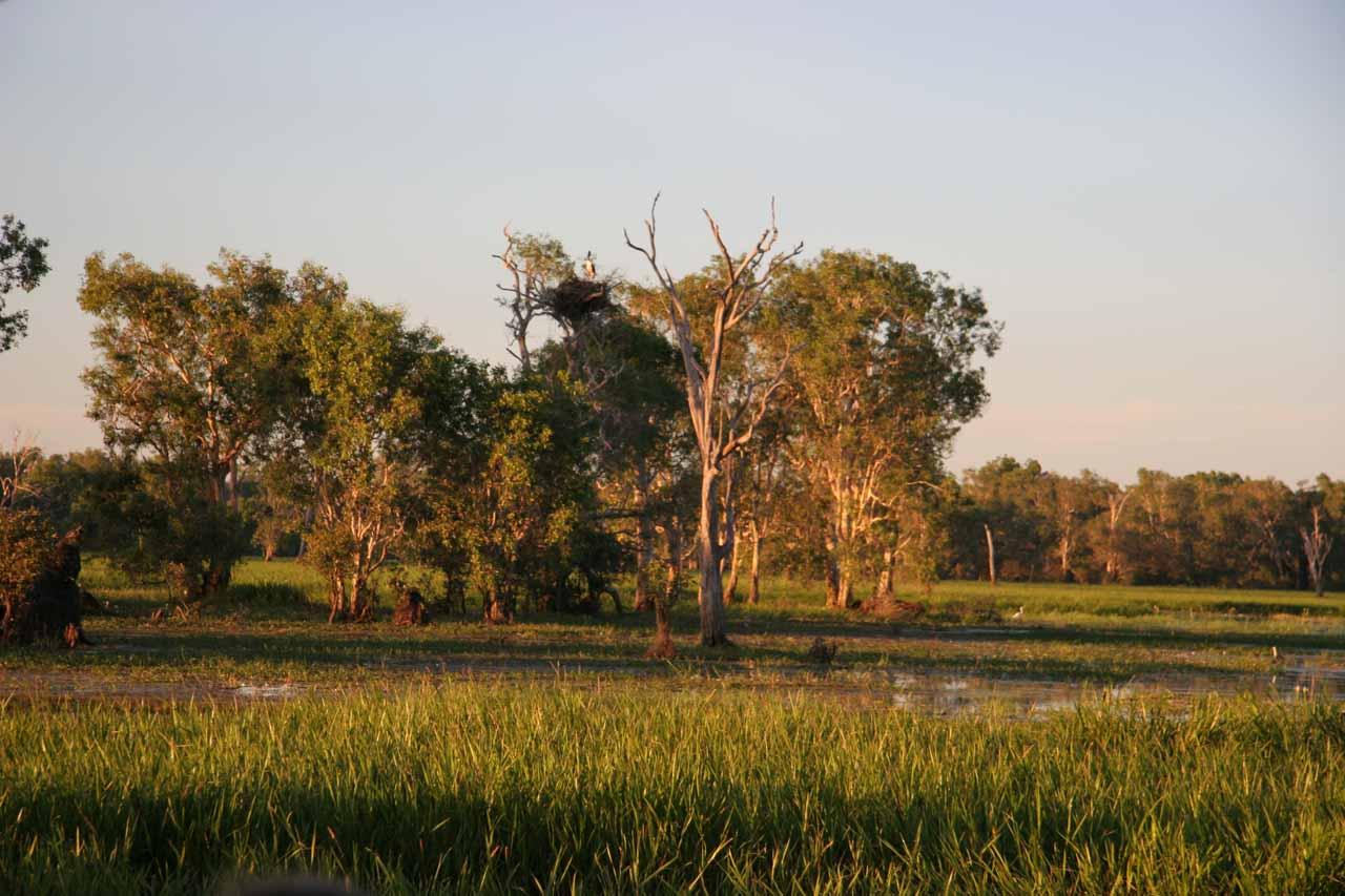 The marshy wetlands of Jim Jim Creek