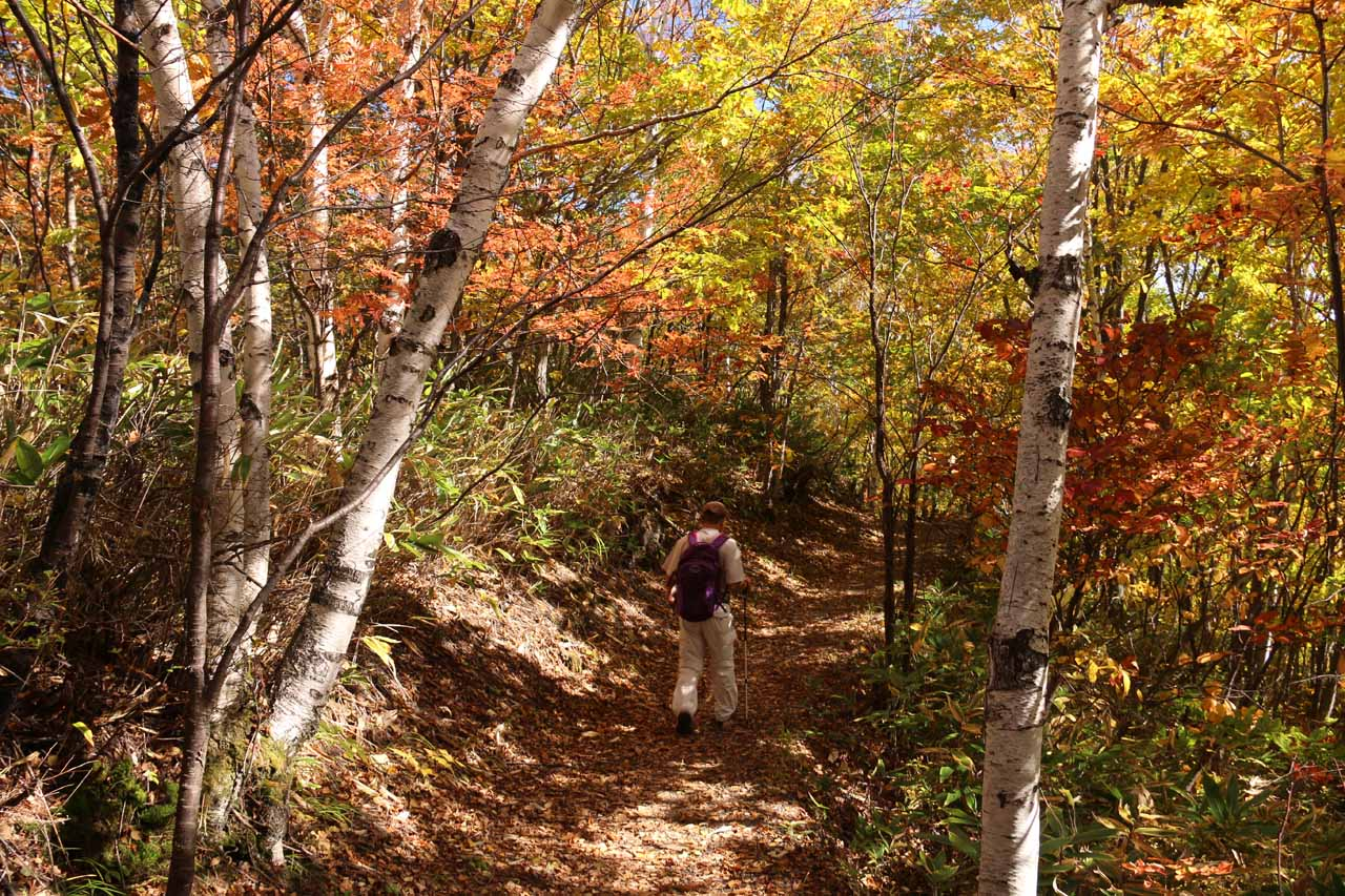 Dad continuing on the trail that was actually still next to the large unmarked clearing on the way to Zengoro Falls