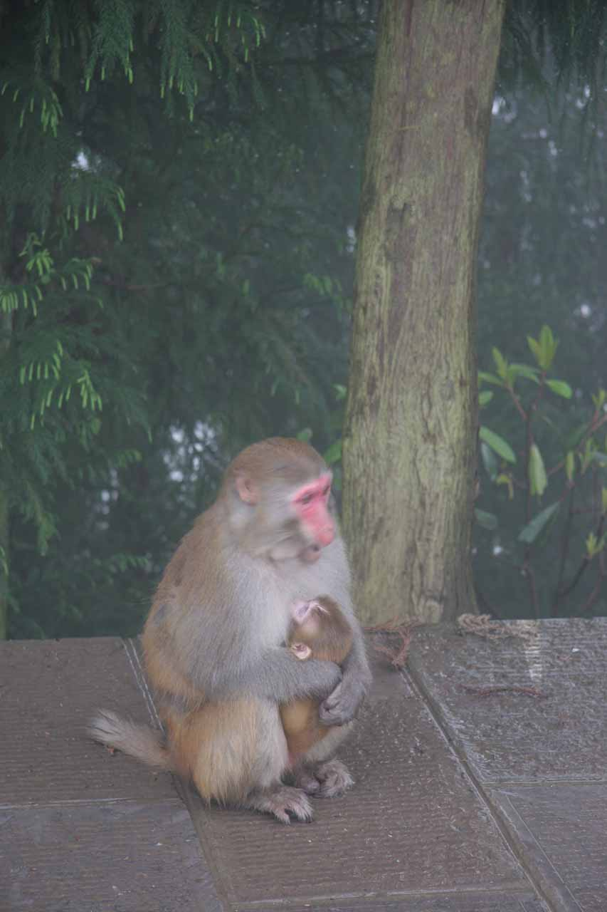 A monkey mother and child