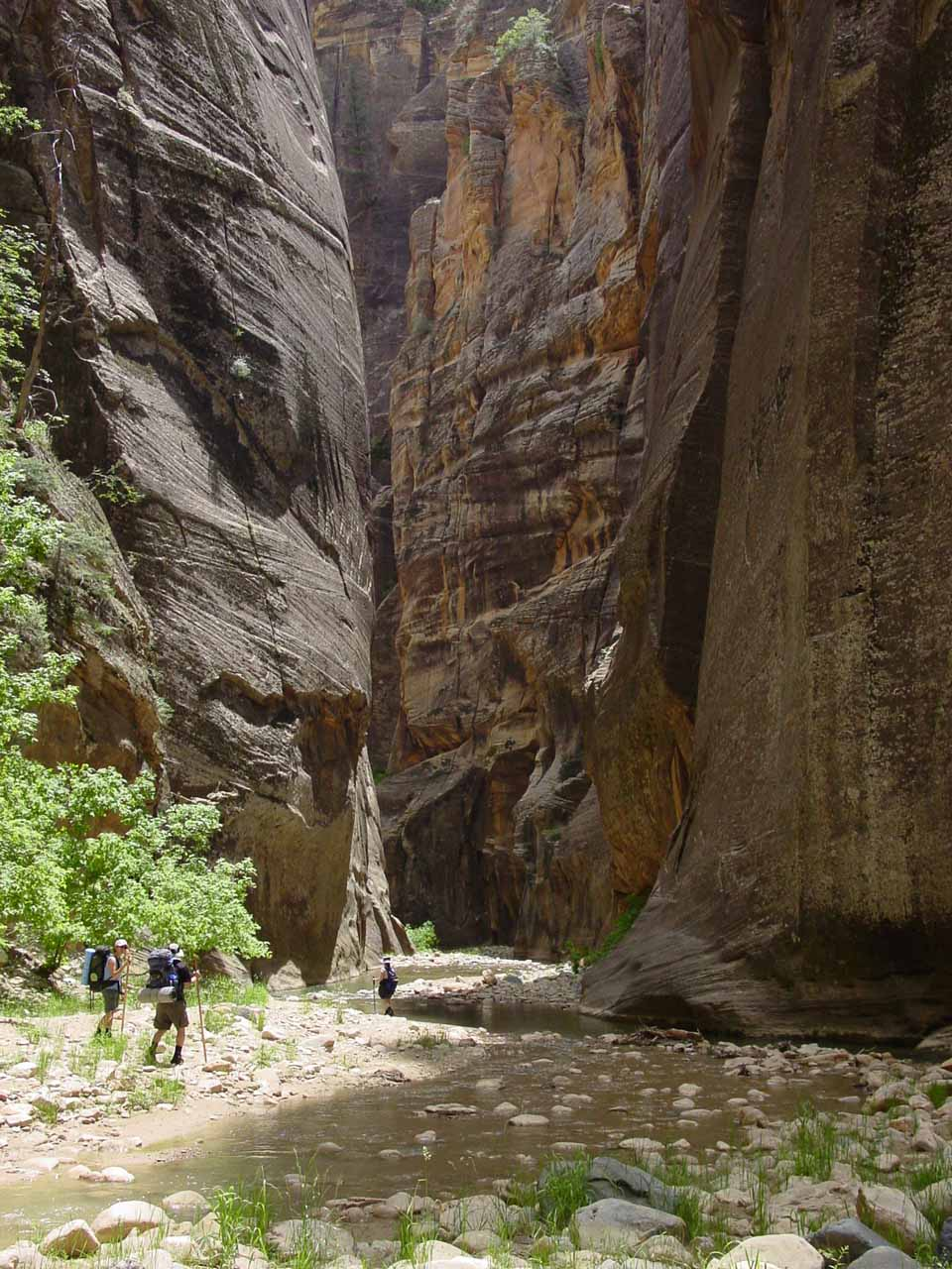 This part of the Narrows was near the Deep Creek confluence where the Virgin River all of the sudden grew three-fold