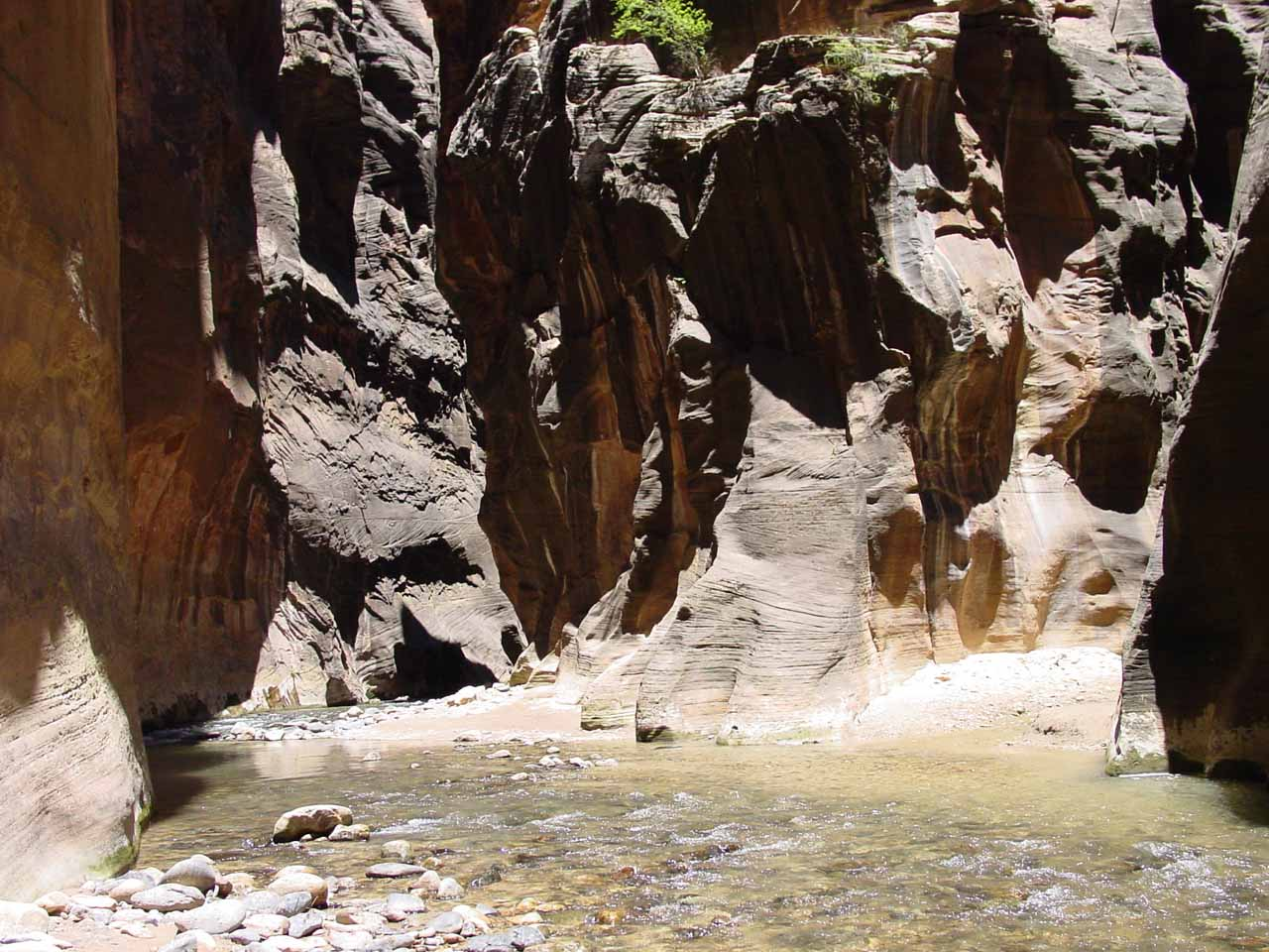 The familiar confluence with Orderville Canyon