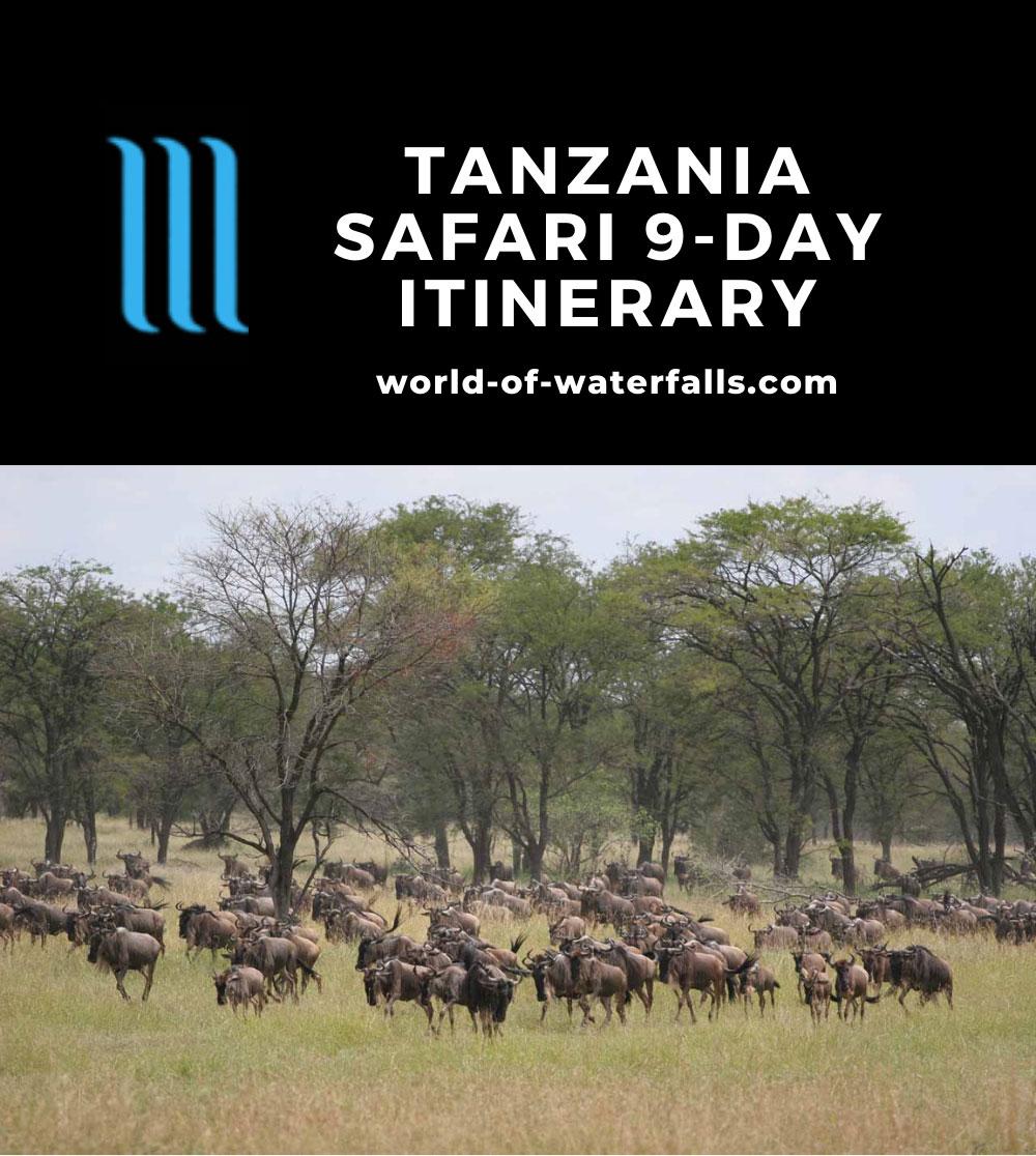 Tanzania Safari 9-Day Itinerary