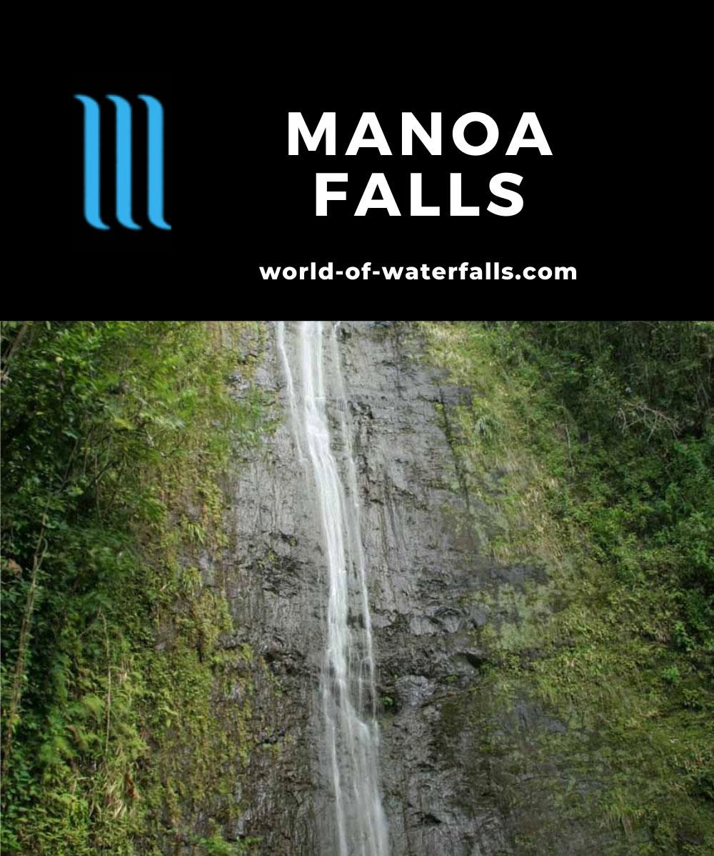 Manoa_Falls_012_01182007 - Manoa Falls
